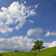 Summer afternoon (pierre hanquin) Tags: blue sky cloud color tree nature clouds landscape geotagged nikon colours belgium belgique pierre couleurs bleu ciel getty blau nuages paysage landschaft arbre wallonie d7000 magicunicornverybest mygearandme mygearandmepremium mygearandmebronze hanquin