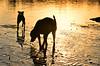 exploring at sunset (Laurarama) Tags: sunset reflection dogs nikon gap sept odc 18105mm d7000 collectionp