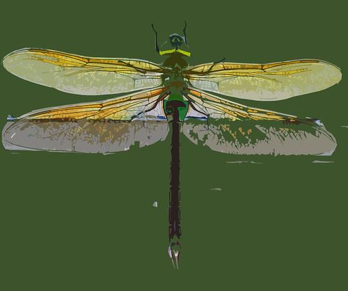 DRAGONFLY cutout 2011-08-10 17