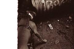 97310021 (Jinette Lopez) Tags: sign basketball train woods pitbull trail highfive