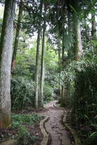 Wooded path meanders