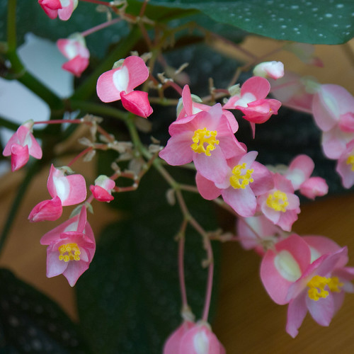 Plants 2.jpg