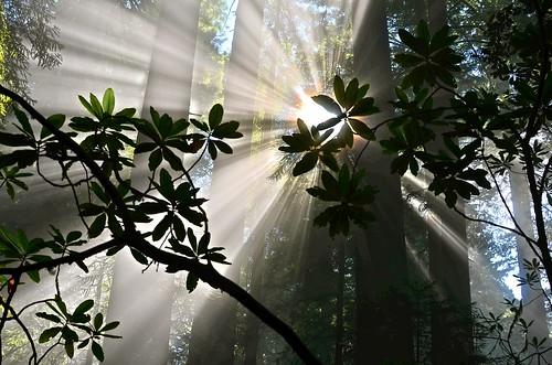 フリー写真素材, 自然・風景, 森林, 樹木, 日光・太陽光線,