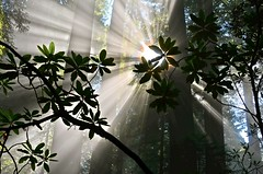 [Free Image] Nature / Landscape, Forest, Trees, Sunlight / Crepuscular Rays, 201108250700