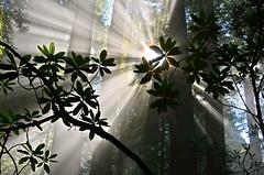 [フリー画像] 自然・風景, 森林, 樹木, 日光・太陽光線, 201108250700