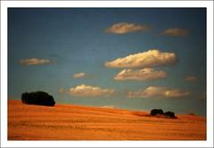 Campos de Castilla (Pemisera) Tags: textura landscape paisaje paysage lamancha castilla paisatge castillalamancha pemisera