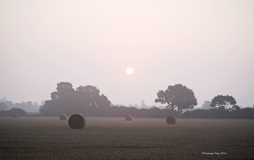 Bales in the mist by yvonnepay615