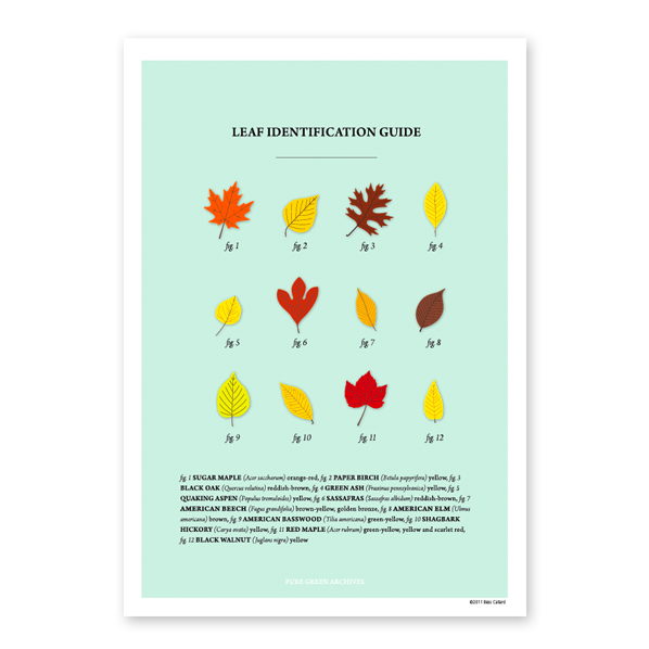 Leaf Identification Guide - Pure Green Mag, Issue 6