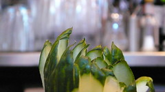 The Engineer. Cocktail Cucumbers Primrose Hill  P1120283-28 (mansionmedia simon knight) Tags: ian restaurant pub cucumber drinks primrosehill libations theengineer ianball simonknight mansionmedia engineerpub