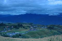 六十石山清晨的藍調 (Rick.Ying) Tags: taiwan hualien sixtystonemountain goldenneedles fulitownship jhutianvillage