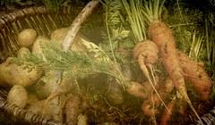 vegetables (horsesqueezing) Tags: man texture boys vegetables soft vegetable pinkfloyd allotment the kimklassen soundtrackmonday