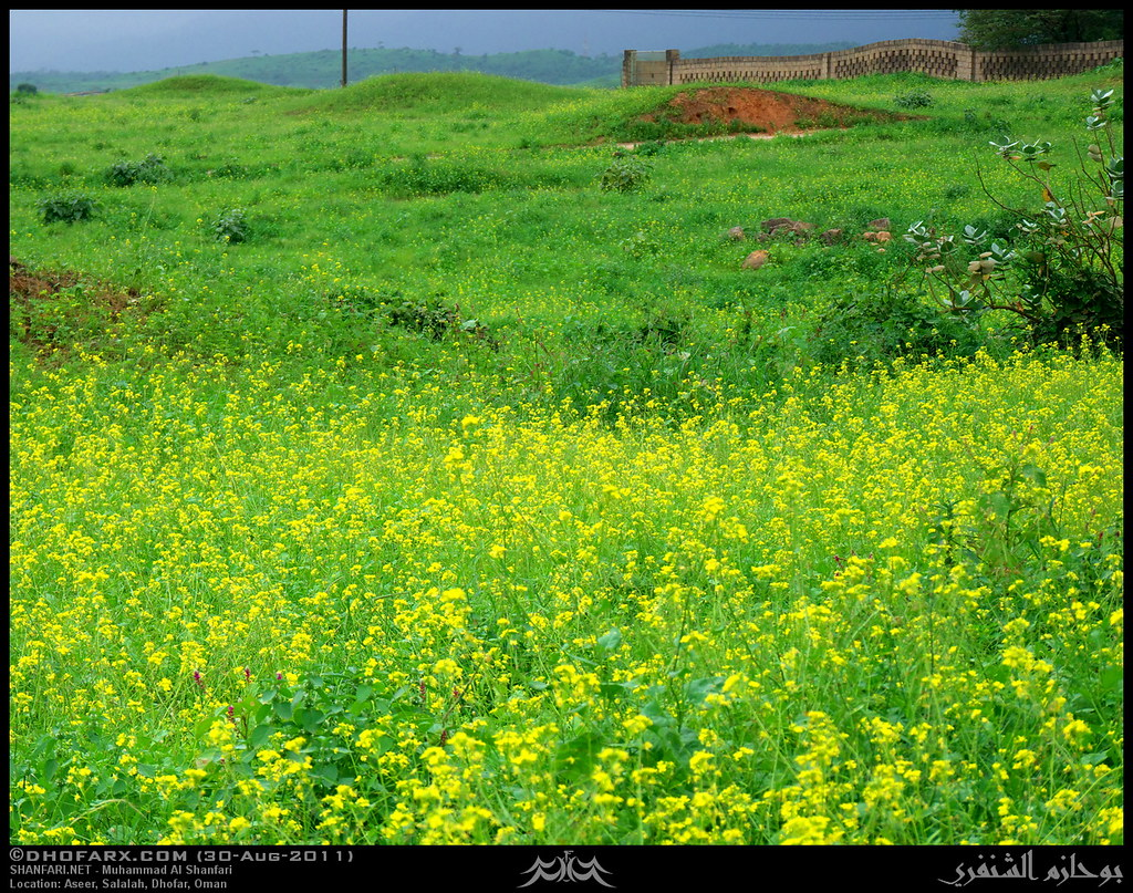 وعقبة أسير ظفار، بتاريخ 30-8-2011 6098842568_9fdb5a1fa