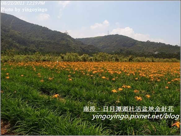 南投魚池_頭社活盆地金針花20110821_R0041567