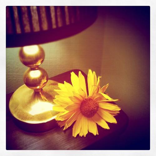 Hittade en blomma på marken som fick följa med hem.