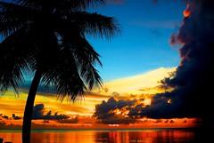 [フリー画像] 自然・風景, 海, 夕日・夕焼け・日没, やしの木, グアム, 201109061900