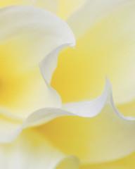 IMG_6286 (Mary Susan Smith) Tags: abstract flower macro yellow garden petals superhero bigmomma onecolour 3waychallengewinner thechallengefactory tcfwinner herowinner ultraherowinner storybookwinner