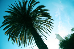 palm on cerro san cristbal (amy.herbs) Tags: chile santiago bluesky palmtree cerrosancristbal virginmarystatue sancristbalhill