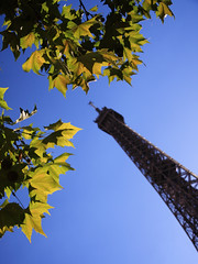Eiffel Tower and Leaves - Paris - France