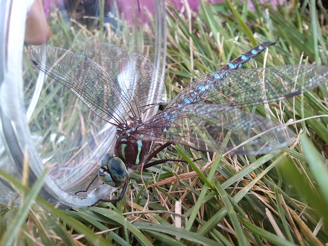 2011-09-05 Dragonfly