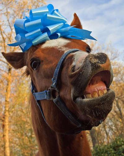 gift-horse1