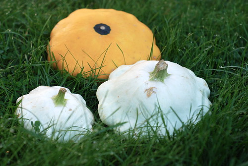 patisson/pattypan squash