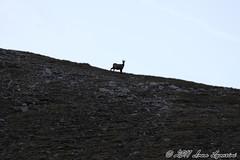 (Ivan Lavarini) Tags: lake fall del lago gran montagna montain paradiso marmots cascata colli marmotte nivolet