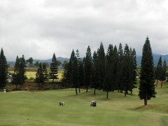 WAIKELE COUNTRY CLUB 224b