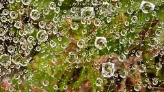toile (Gatan Portenart) Tags: montagne eau pluie vert brouillard goutte araigne toile humidit