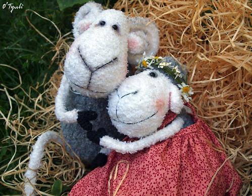 Sheeps15