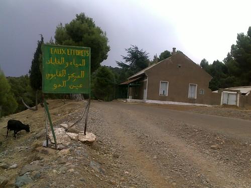 Ain Almou عين ألمو