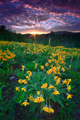A Mule Ear's Sunrise (wrtrekker (Jerry T Patterson)) Tags: bear ranch park flowers camping summer camp horse mountains west cowboys buffalo hiking wildlife parks moose hike jackson lodge willow western antelope snakeriver patterson wildflowers wyoming elk grizzly rv tetons bison willows lupine ynp sping balsamroot pronghorn tnp muleears willowflats mygearandme