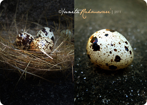 Quail Eggs 2