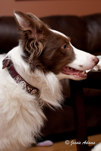 Every good dog deserves a Paco collar!