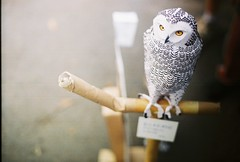 an owl papercraft (yttria.ariwahjoedi) Tags: street people bird film car analog canon paper toy community day ae1 handmade creative free exhibition owl bandung