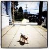 Hello little dog~ (apophis_93) Tags: oakland neighborhoods temescal ocvbphoto2011