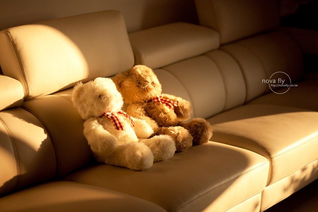 無聊隨手拍 – 泰迪熊