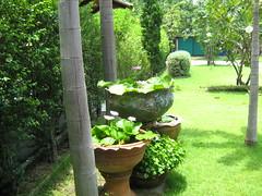 สวนหน้าบ้าน 245103
