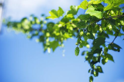 フリー写真素材, 花・植物, 葉っぱ,