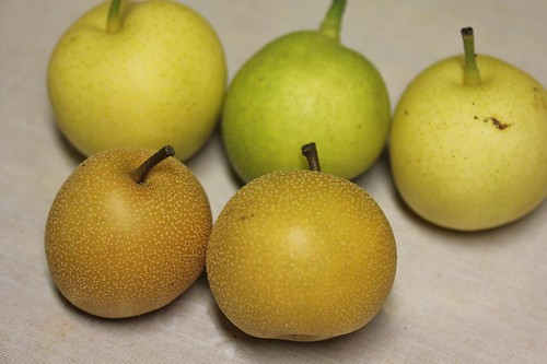 Asian Pear 'Hosui' vs Other Asian Pear