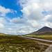 Lichens view