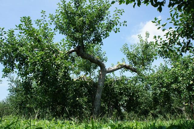 our farm on August, 2011
