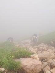 霧の中を登る