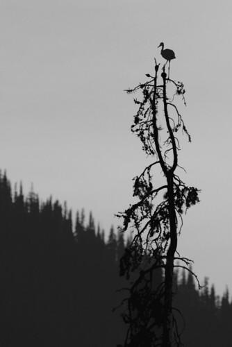 heron-tree