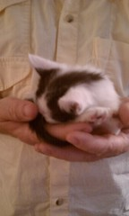 Tiny Rory