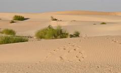 The Sahara Desert (**El-Len**) Tags: africa sahara sand desert westafrica mali footprint gettyimages erg naturepoetry flickrmarketplace