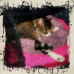 """"""" i feel icky... """" (texym11-in and out :)) Tags: texture cat chat tabby gato adopted tre loved katzen rescued tomcat sleepytime 2011 inconclusive aug24 fiv threelegcat tresick mommyworried"""