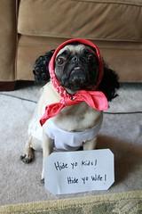 Pork- Halloween 2010 (WeeLittlePiggy) Tags: dog halloween costume pug hideyokids