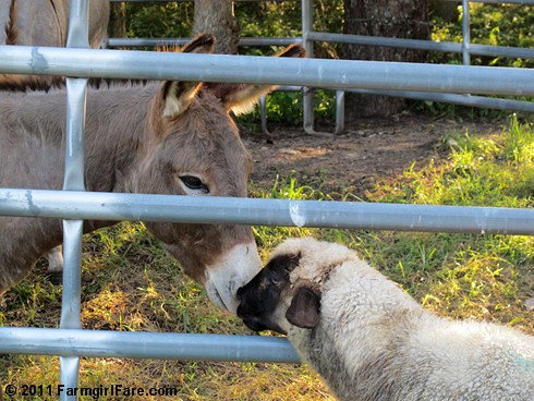 Gus and Finny share a little kiss - FarmgirlFare.com
