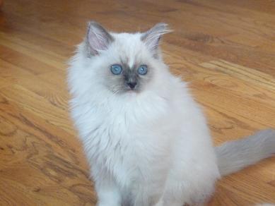 Tyco-as-a-kitten