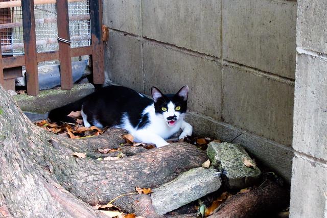Today's Cat@2011-08-27